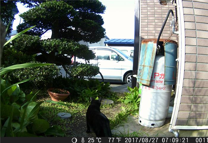 トレイルカメラ 猫 動体検知撮影
