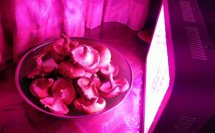 しいたけ 植物用LEDライト