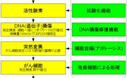 抗ガン剤の量と副作用と予後の数値の変化 闘病記02