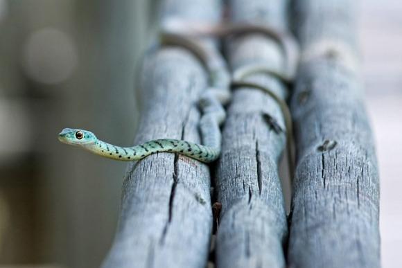 蛇 ことわざ 慣用句