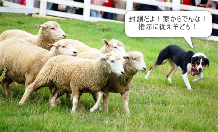 羊 牧羊犬