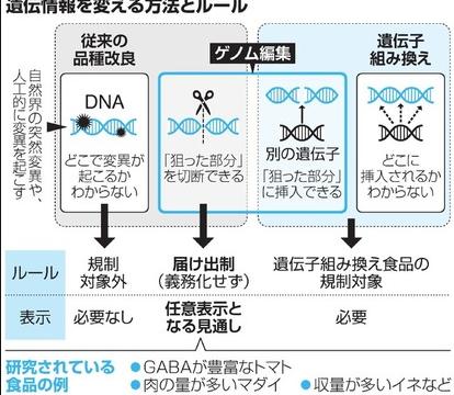 遺伝子編集