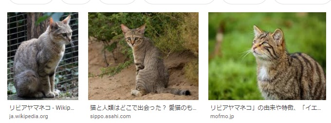 猫のルーツ