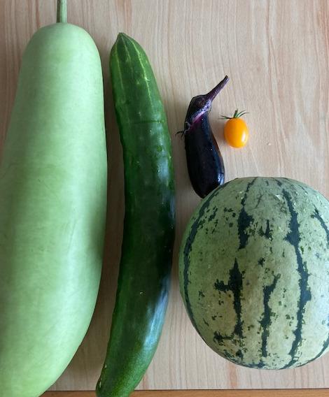 野菜 成長 でかい