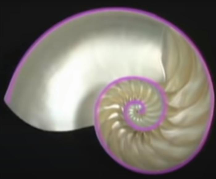 生命の螺旋